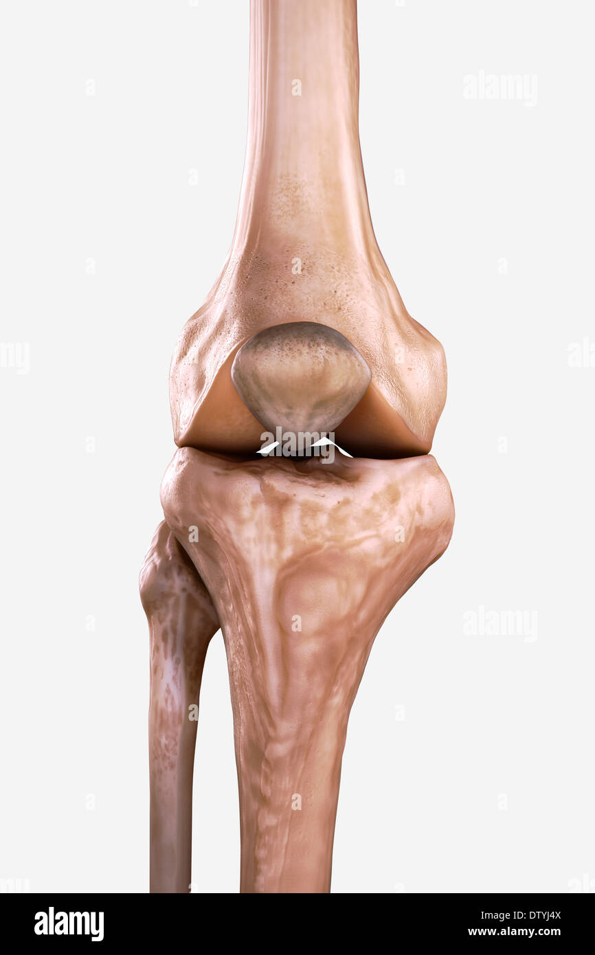 Right Knee Bones Stock Photo: 66989802 - Alamy