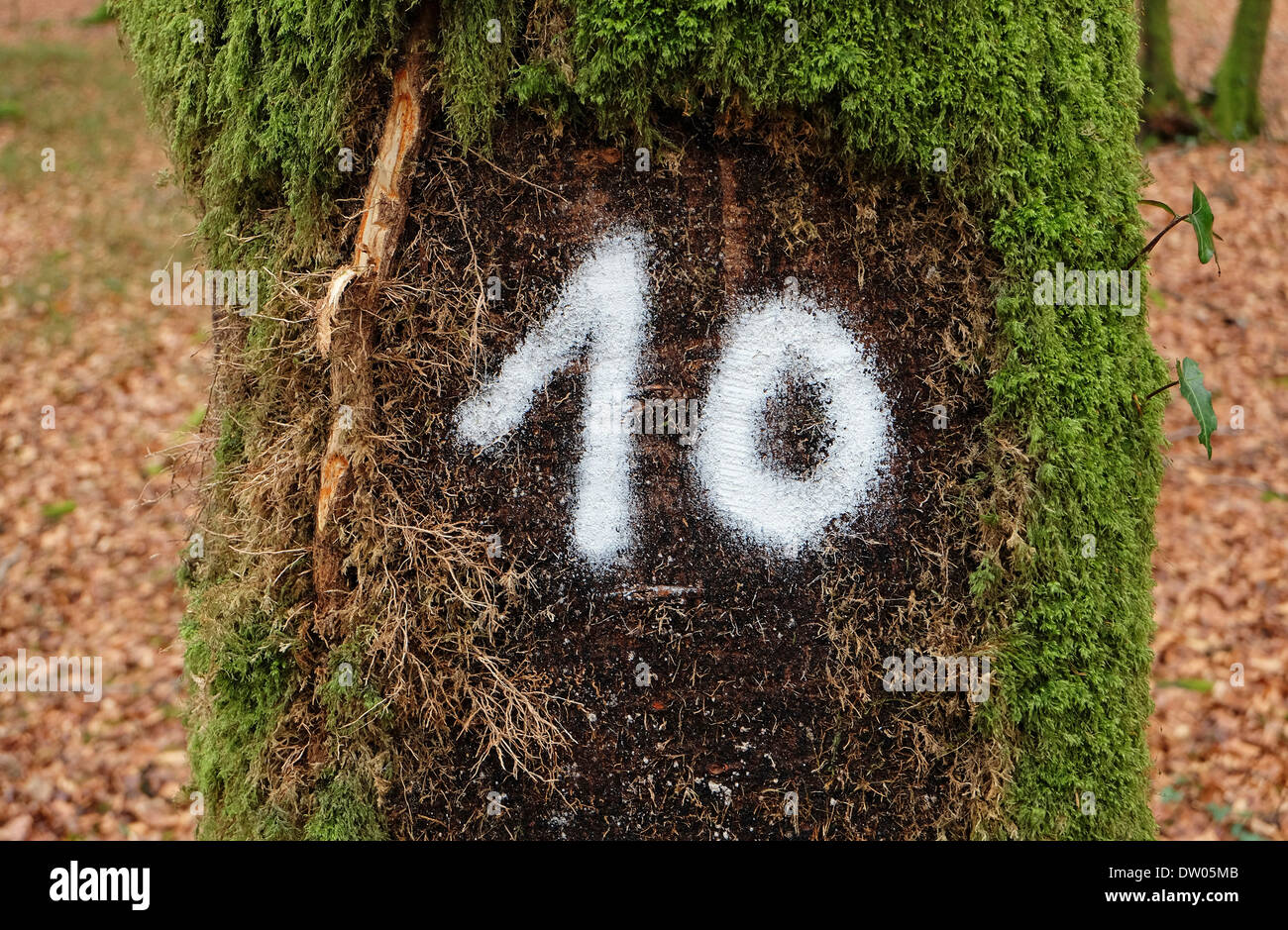 white number 10 painted on tree trunk bark - Stock Image