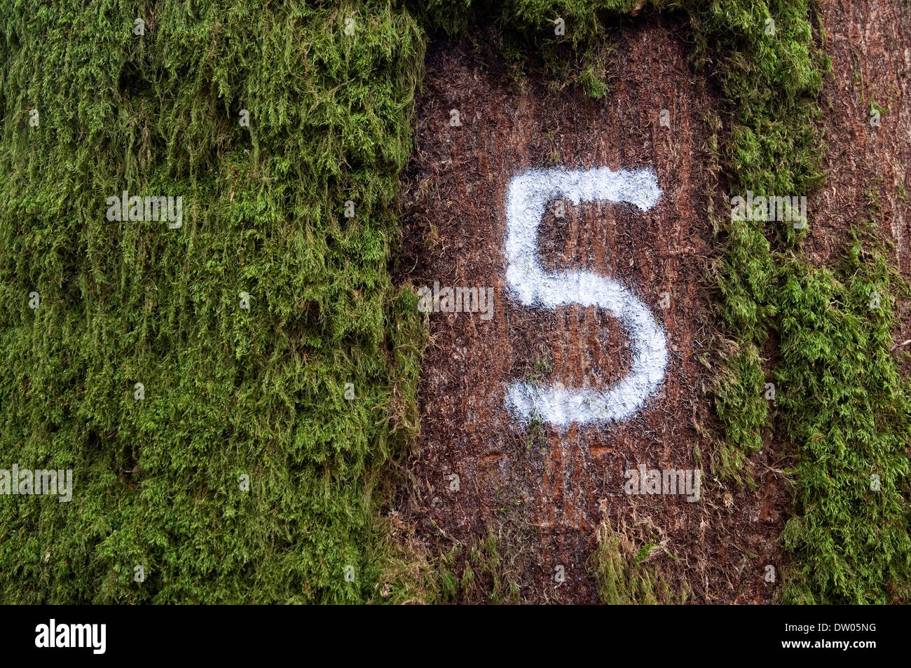 white number 5 painted on tree trunk bark - Stock Image