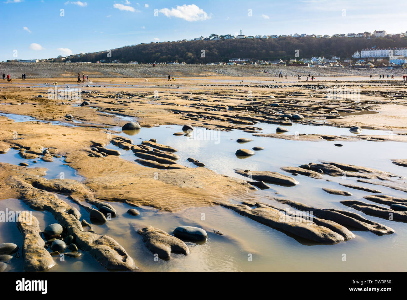 Clay and peat beds containing an ancient forest exposed on the beach at Westward Ho! shortly after the winter storms of 2014. North Devon, England. - Stock Image