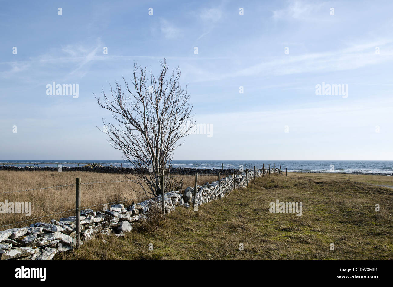 Barb wire fence at an old stonewall by a rural swedish coast - Stock Image
