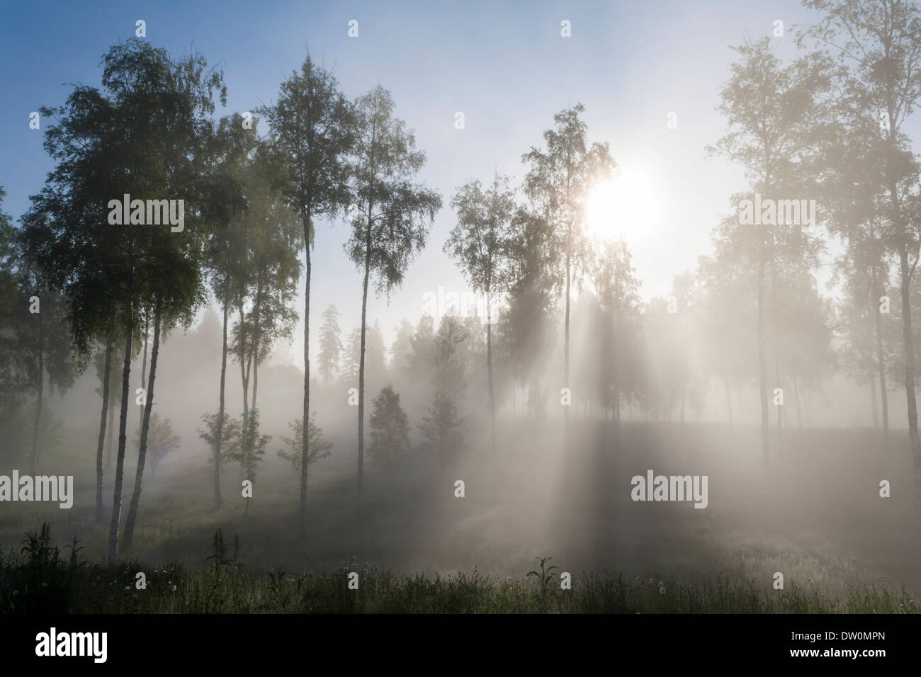 Early Morning Sun Shining through Mist and Trees - Stock Image