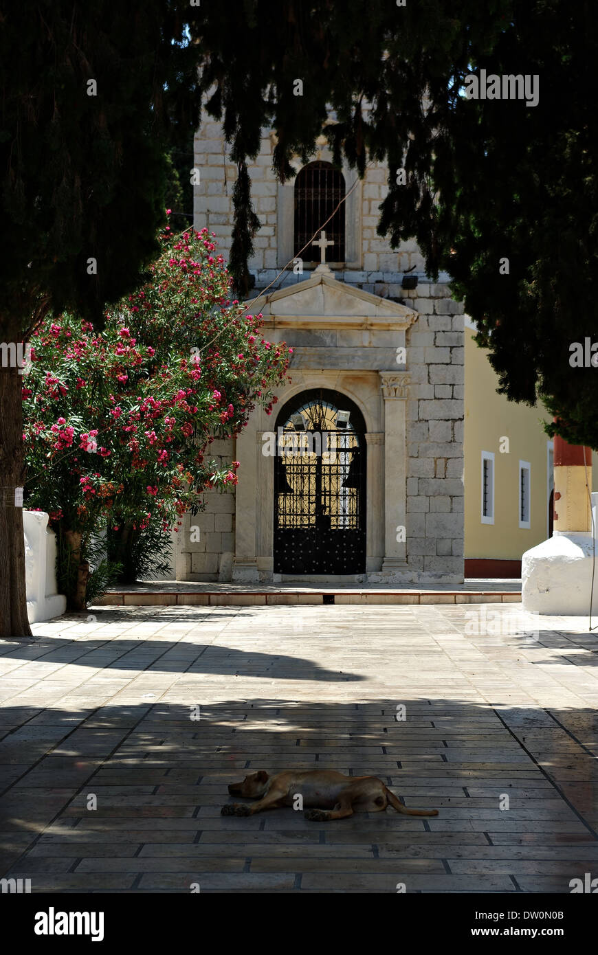 Dog sleeping in tree shadow on stone pavement in front of churche entrance. - Stock Image