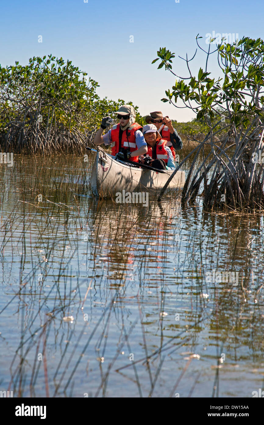 Everglades National Park, Florida - Visitors paddle canoes on a trip led by a park ranger. - Stock Image
