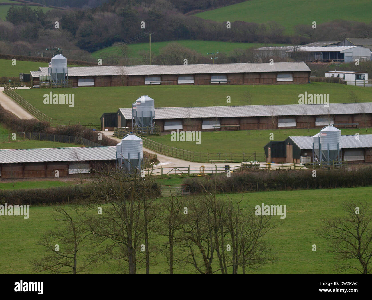 Poultry farm, Cornwall, UK - Stock Image