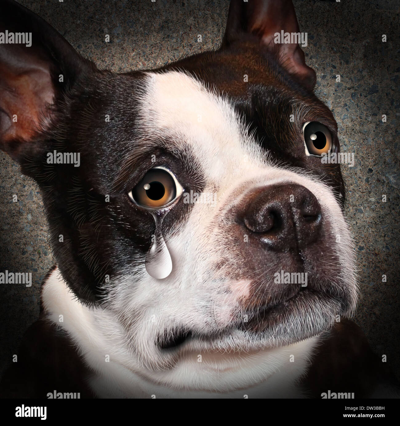 Lost pet animal cruelty and neglect concept with a sad crying dog looking at the viewer with a tear of despair as Stock Photo