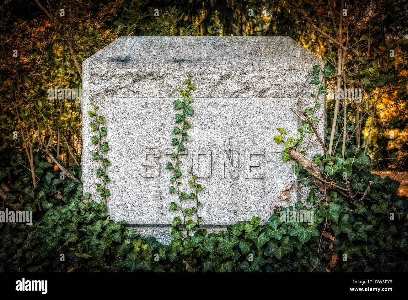 Tombstone at Machpelah cemetery with vine growing on it. - Stock Image