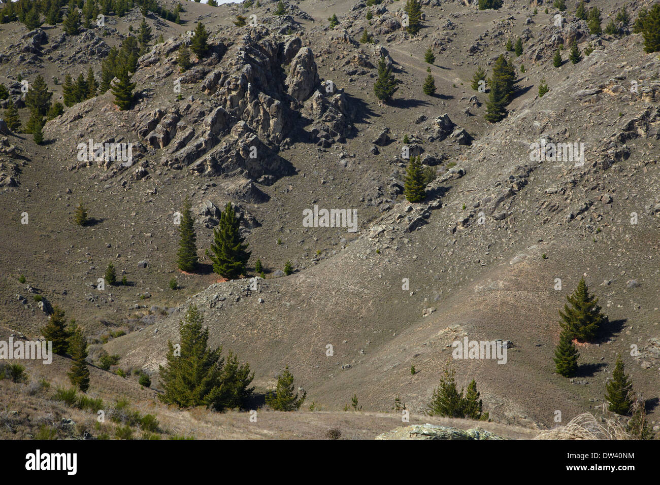 Wilding pines and schist rock tors, Alexandra, Central Otago, South Island, New Zealand - Stock Image