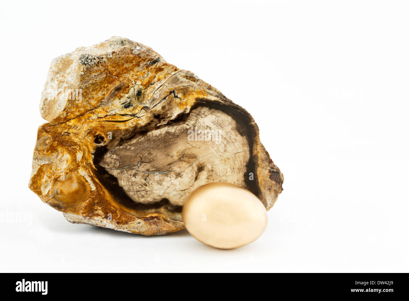Specimen of petrified wood placed with gold nest egg to enhance time and strategy concepts accompanying investment & retirement. - Stock Image