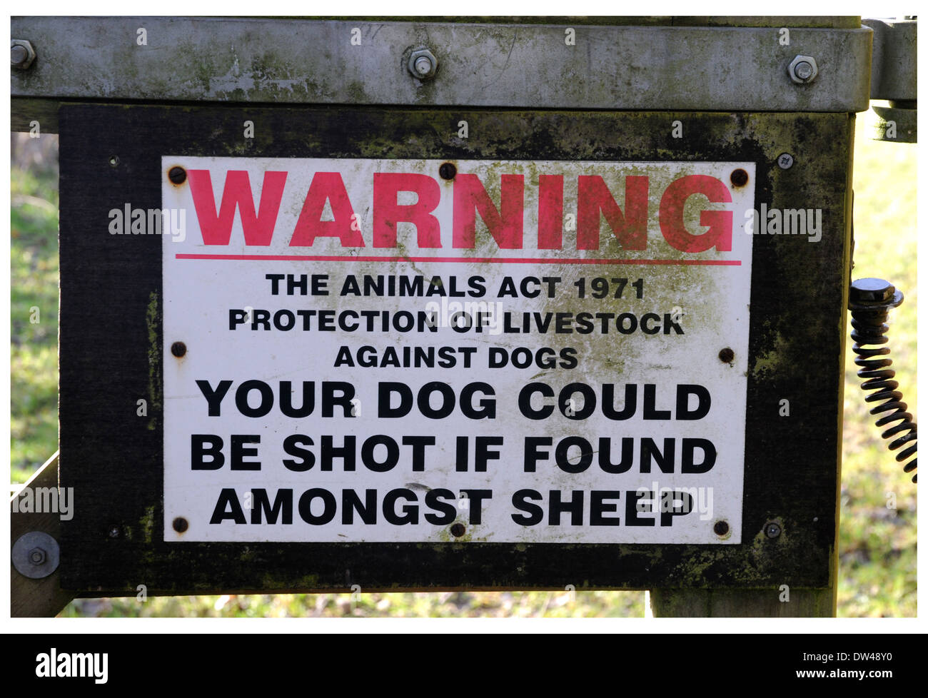 A stark warning to irresponsible dog owners on a farm gate leading to a field used to graze sheep. - Stock Image