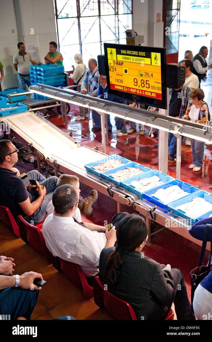 Fresh seafood being sold at auction, with wholesalers bidding at lots. Xabia, Spain. - Stock Image