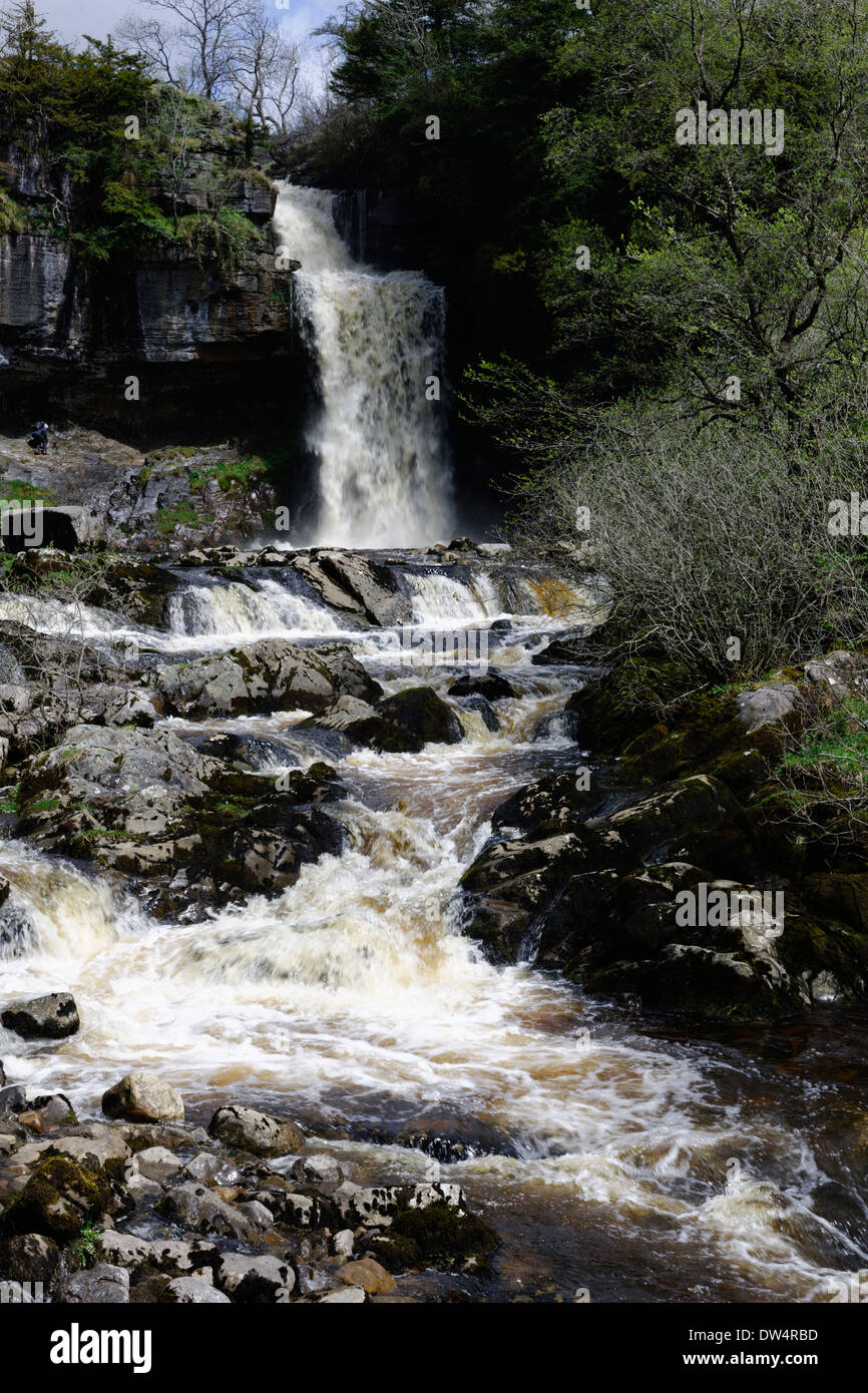 Spring water cascading over the Great Scar Limestone cliff and Lower Ordovician Slates of Thornton Force, Yorkshire, England - Stock Image