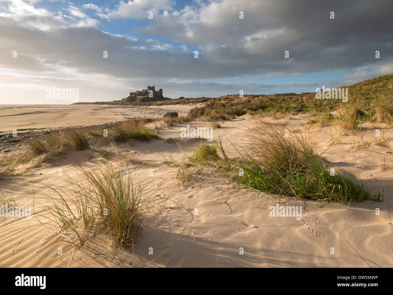 Sand dunes above Bamburgh Beach, with Bamburgh Castle in the background, Northumberland, England. - Stock Image