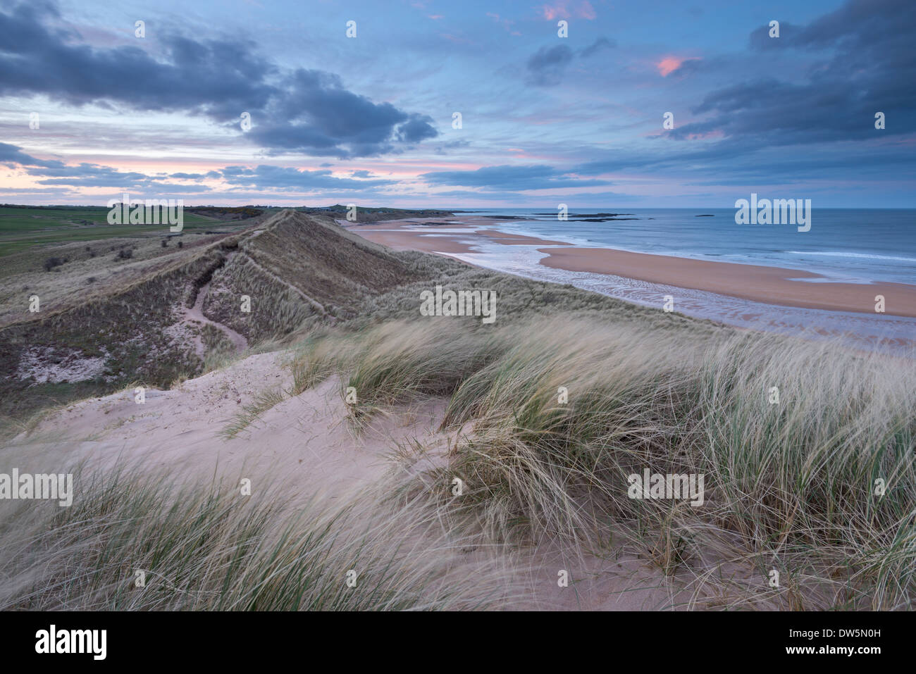 Sand Dunes above Embleton Beach during twilight, Northumberland, England. Spring (May) 2013. Stock Photo