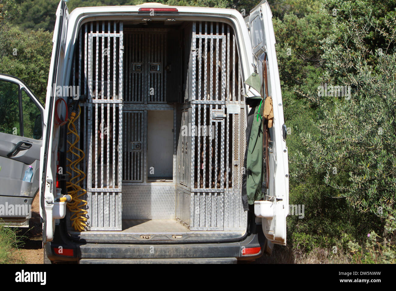 Dog German Shorthaired Pointer  / several adult dogs hunting traveling in a cage in the trunk of the car - Stock Image