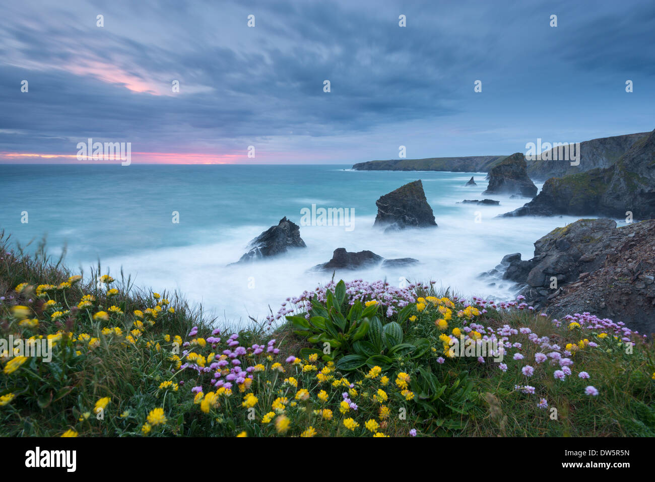 Wildflowers growing on the clifftops above Bedruthan Steps on a stormy evening, Cornwall, England. Spring (May) - Stock Image