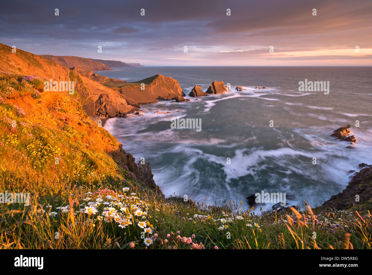 Glorious evening sunlight illuminates the dramatic cliffs of Hartland Quay, looking towards Screda Point, Devon, England. - Stock Image