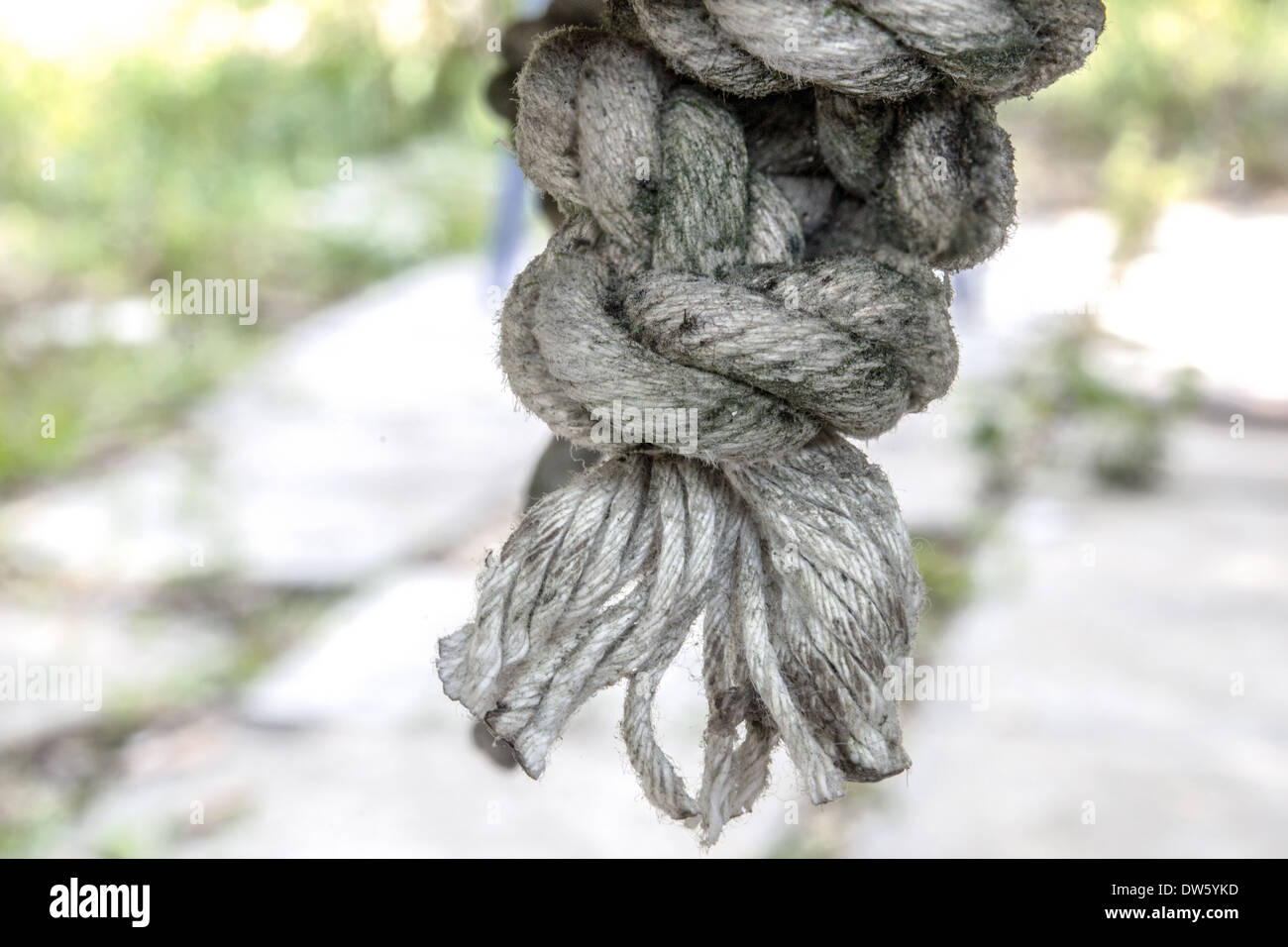 A grungy nylon rope used to hang a swing. - Stock Image