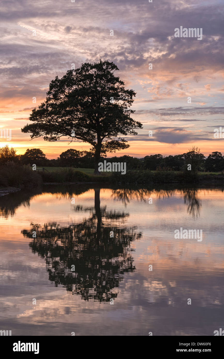 Tree and reflection silhouetted in front of a beautiful sunset, Morchard Road, Devon, England. Summer (August) 2013. - Stock Image