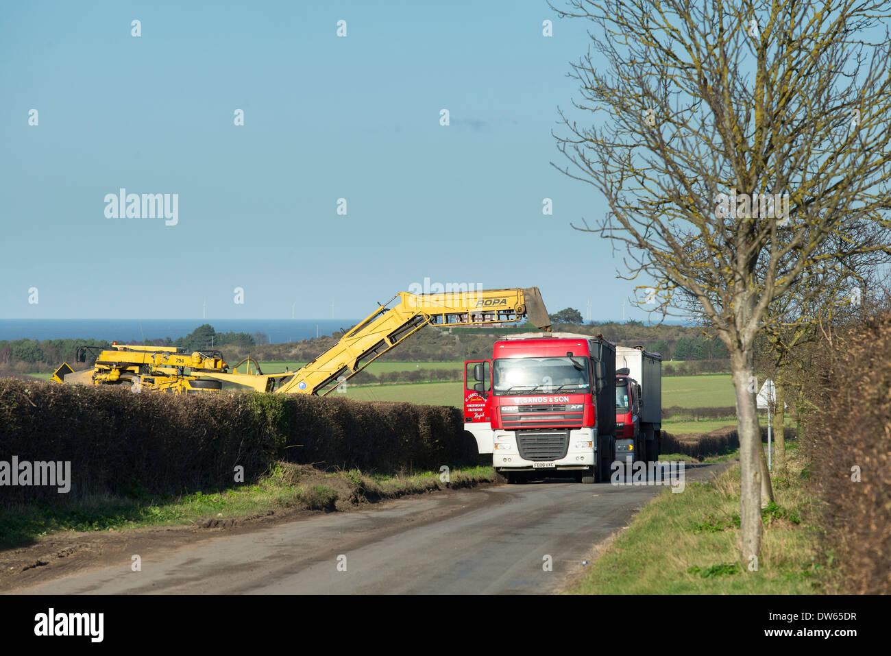 Roadside sugar beet loading, - Stock Image