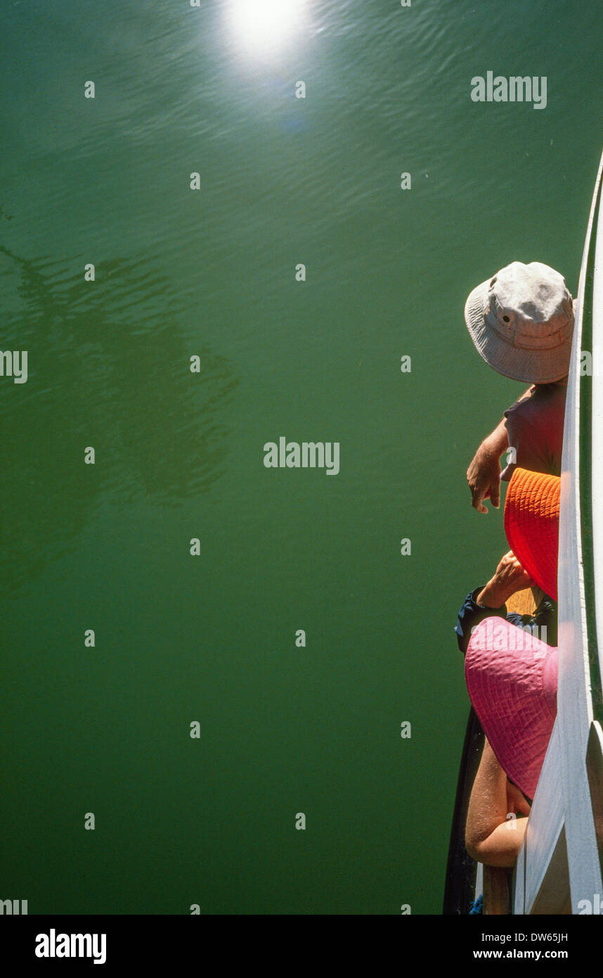 tourists ferry boat green sea hats charter cruise whale seal  dolphin watching - Stock Image
