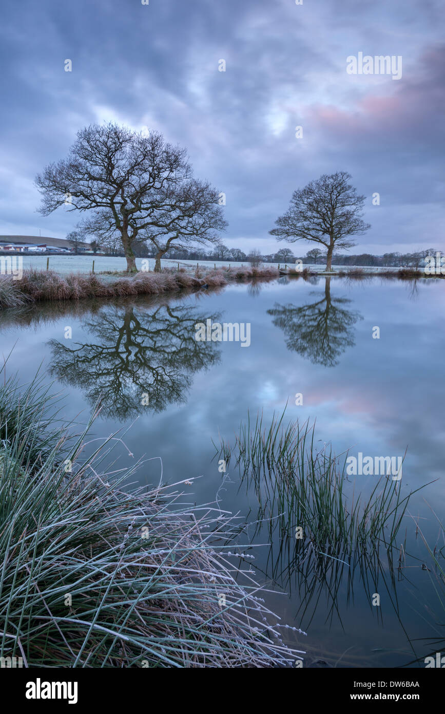 Frosty winter morning beside a rural pond, Morchard Road, Devon, England. Winter (January) 2014. - Stock Image
