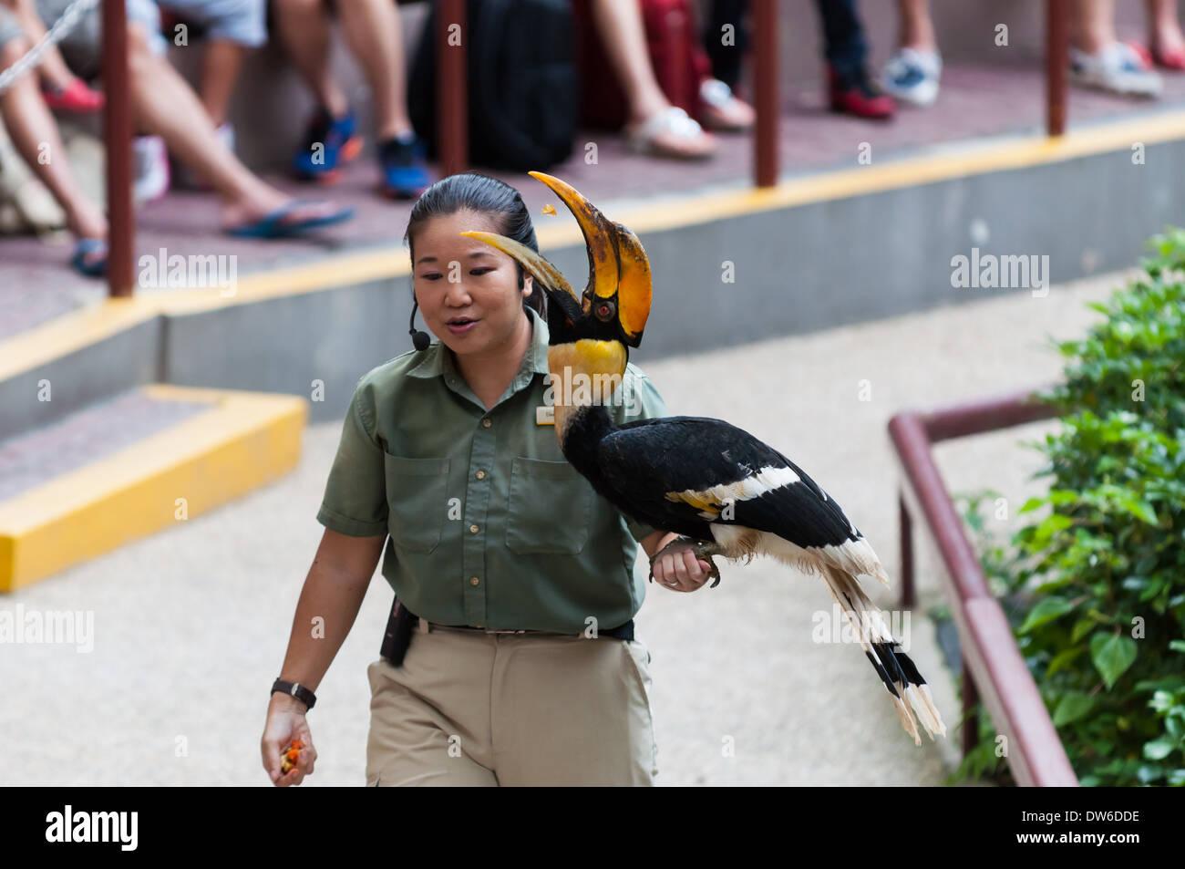 Bird show at the Singapore Zoo. - Stock Image