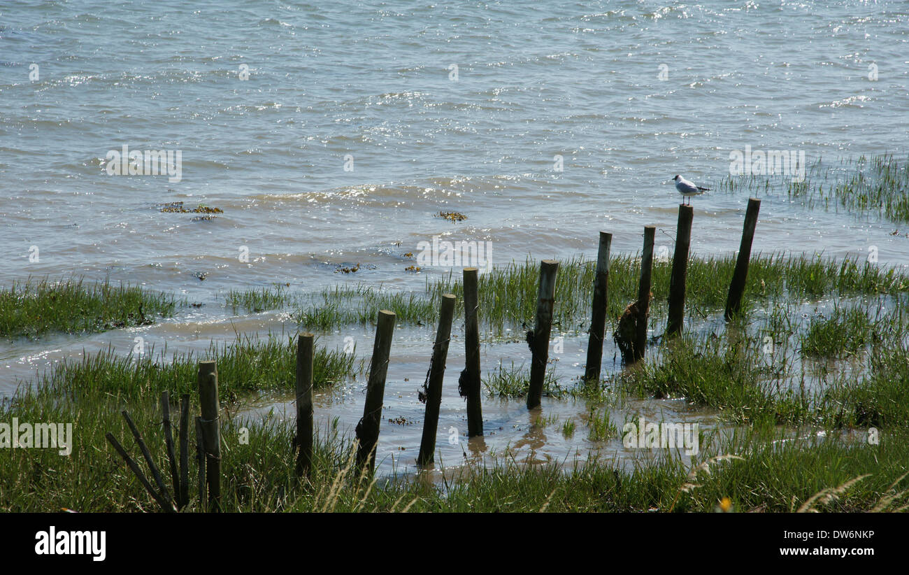 River Orwell, Levington, Suffolk, England Stock Photo: 67146234 - Alamy