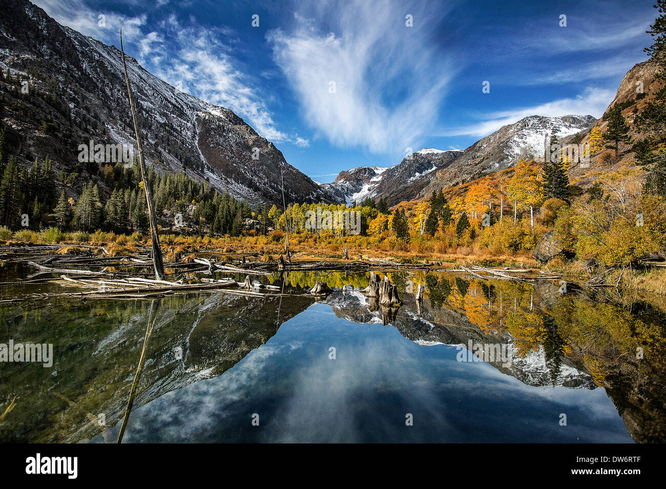 Beaver pond, Lundy Canyon, Sierra Nevada Mts, California - Stock Image