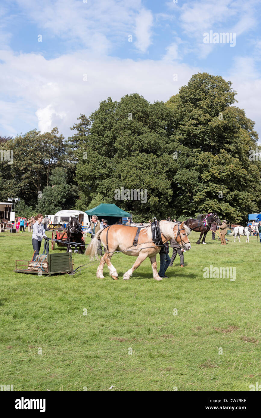 Working horses at Country show Frampton; Gloucestershire - Stock Image