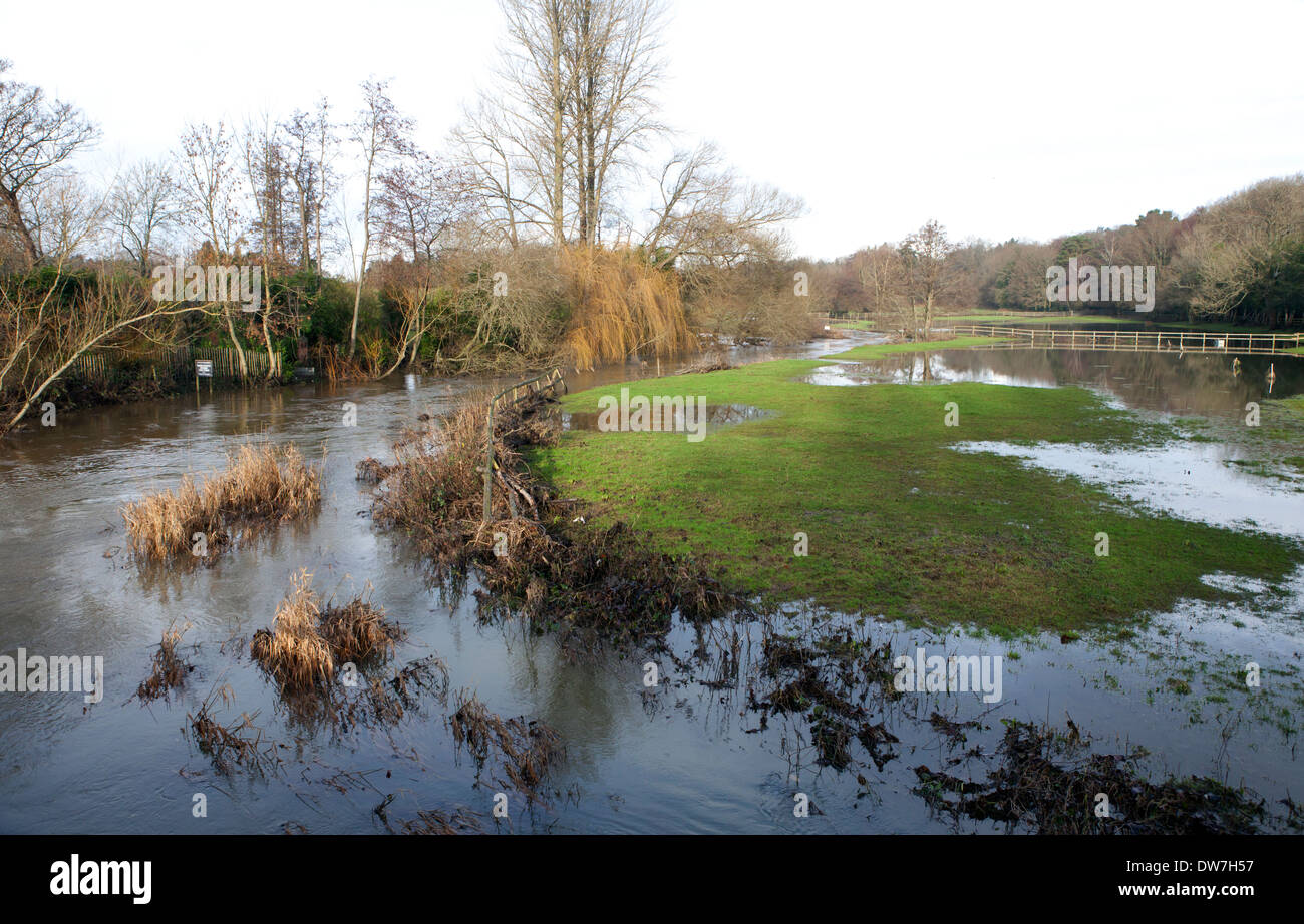 River Wey burst it's banks at Tilford Surrey - Stock Image