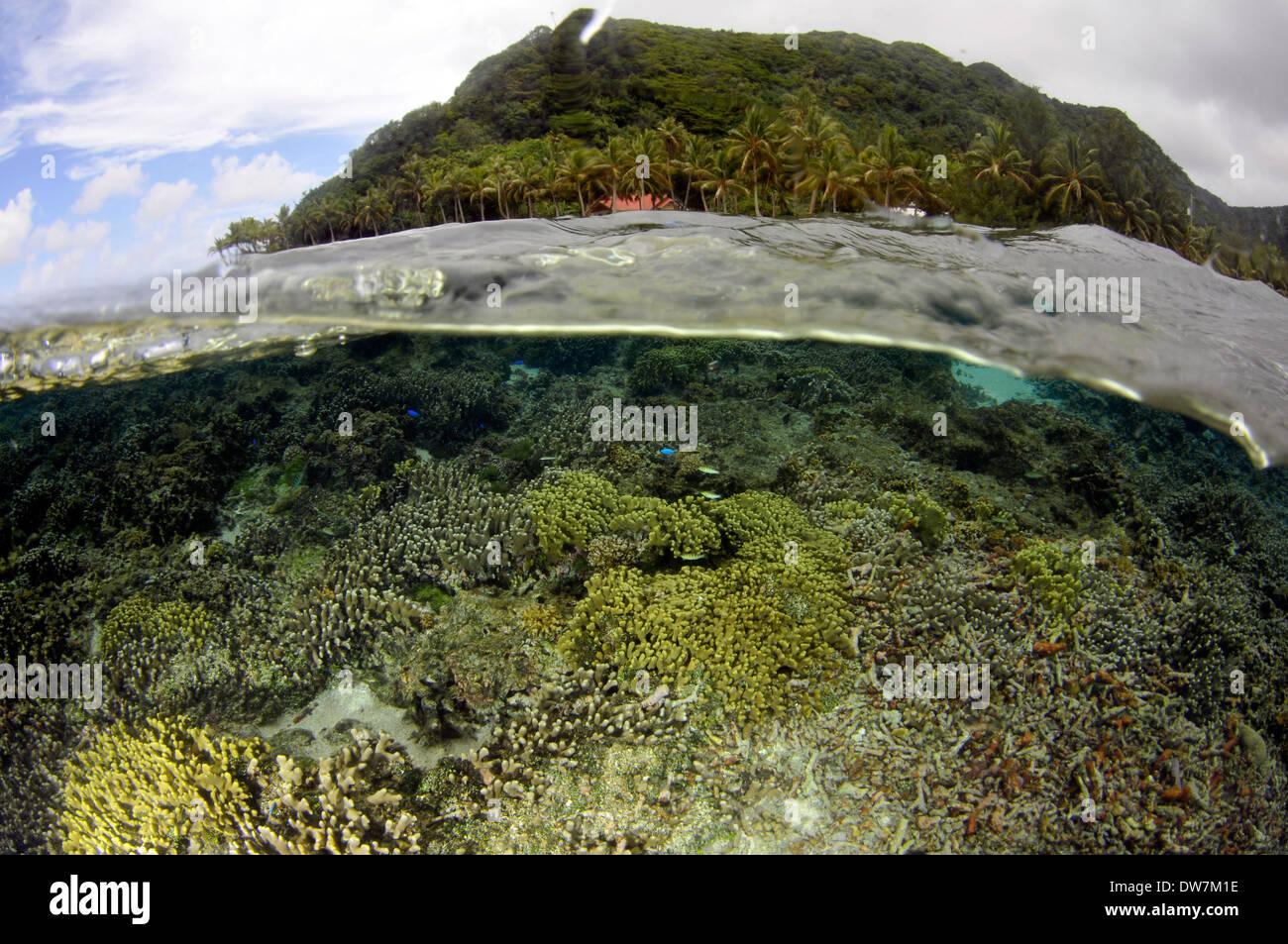 Shallow coral reef with several Acropora species, Fagaitua Bay, Pago Pago, Tutuila Island, American Samoa - Stock Image