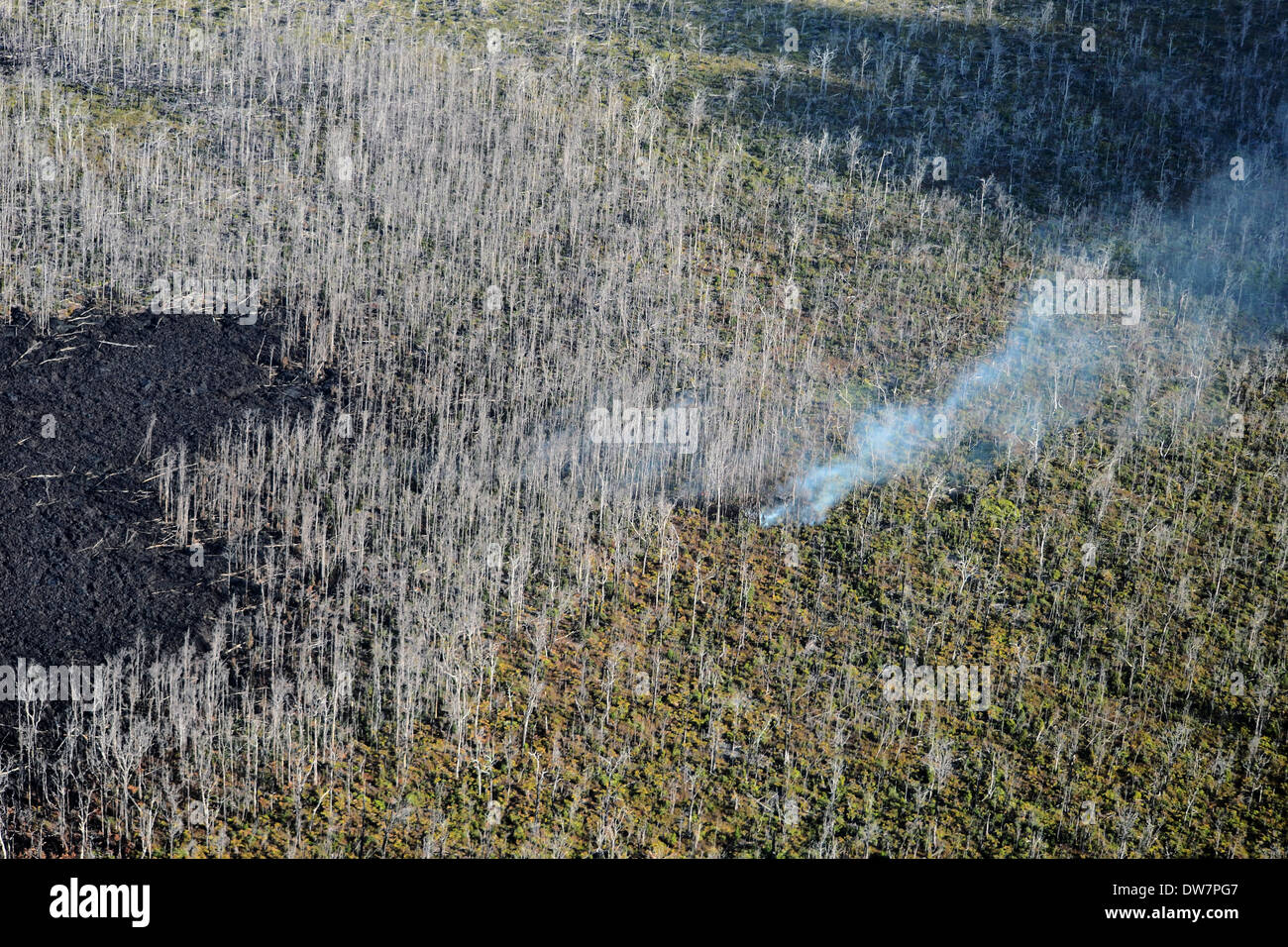 Aerial view of destroyed trees in an active lava field in the Kilauea volcano, Volcanoes National Park, Big Island, Hawaii - Stock Image