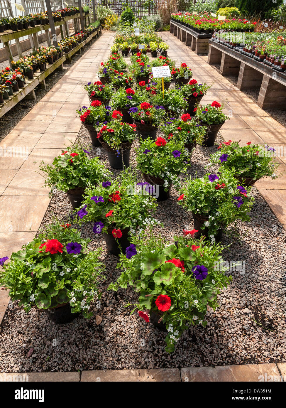 DISPLAY OF POTTED PLANTS FOR SALE IN GARDEN CENTER/CENTRE UK - Stock Image