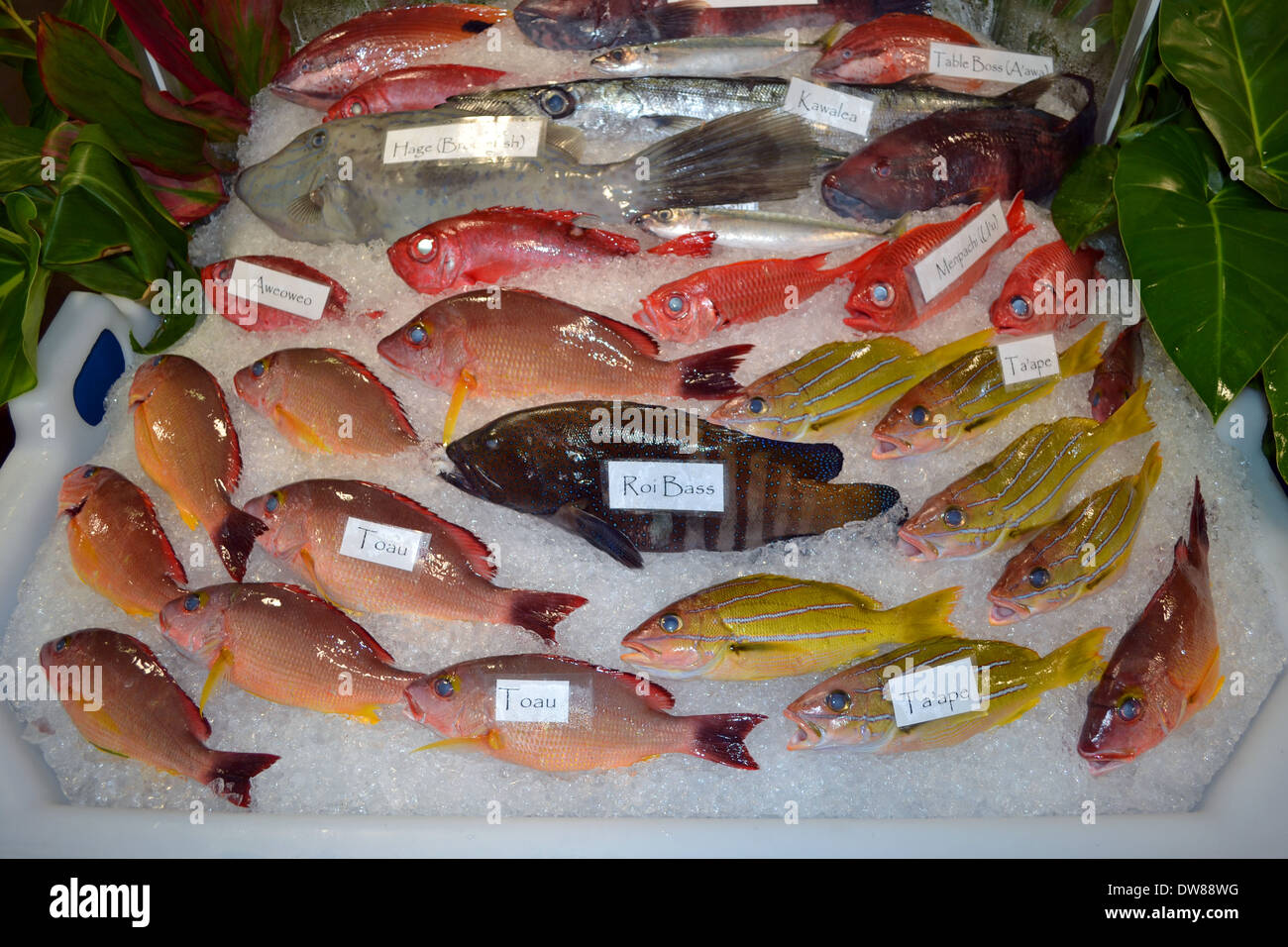 A variety of Hawaiian fishes on sale, Hawaii Seafood Festival, Oahu, Hawaii, USA - Stock Image