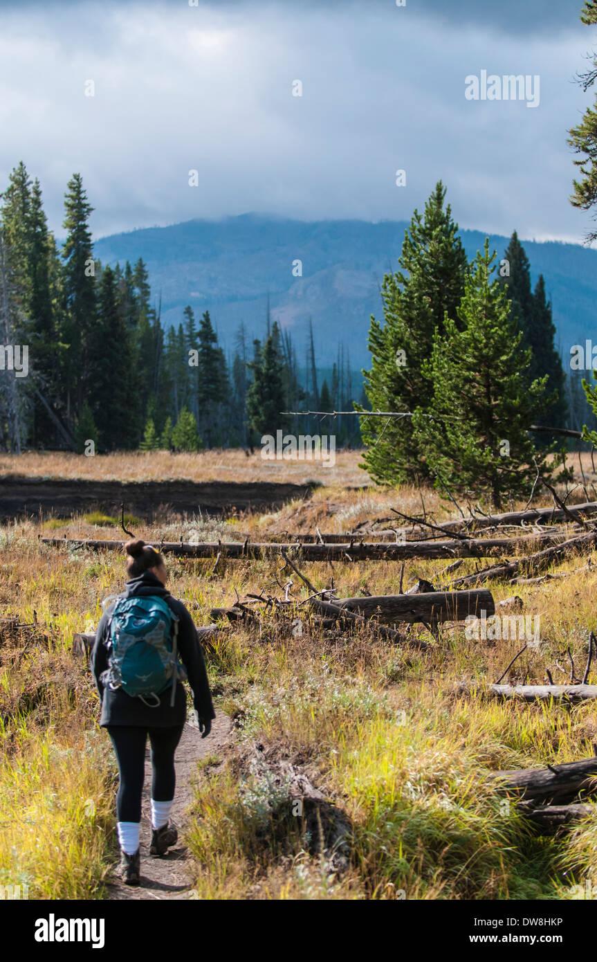 Hiker in Yellowstone - Stock Image