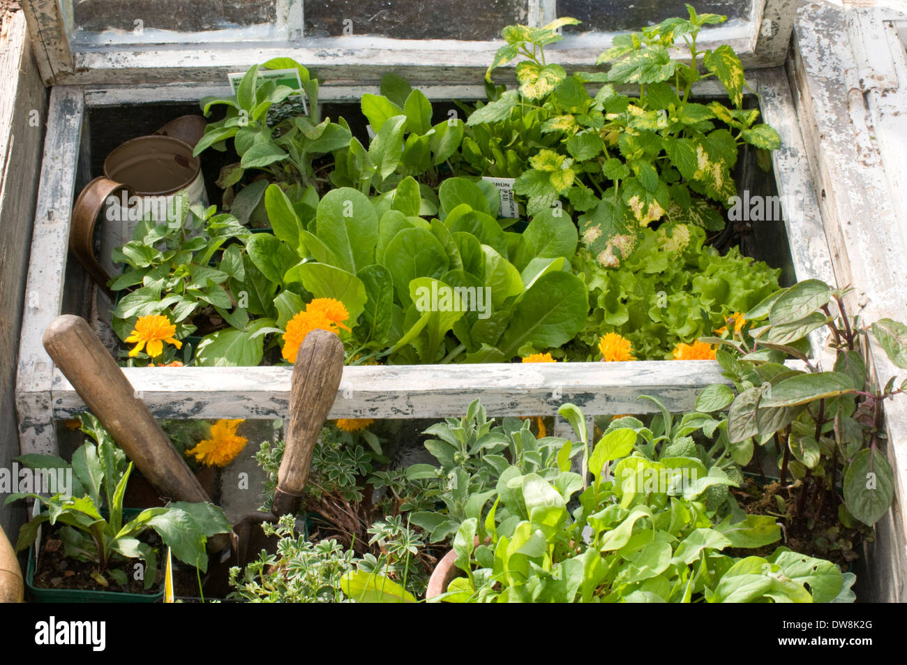 Cold frame, hotbed - Stock Image