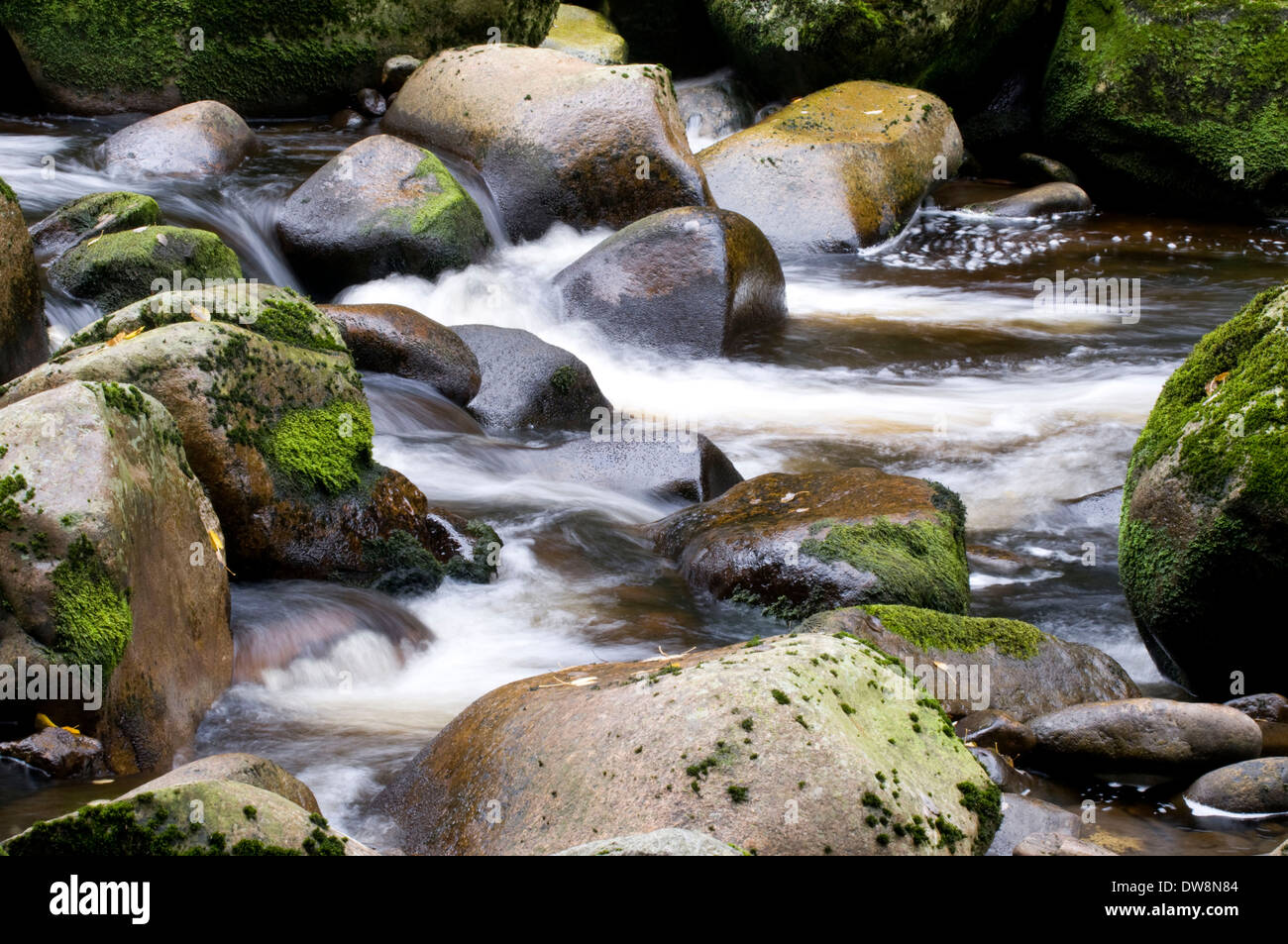 Forest brook - Stock Image