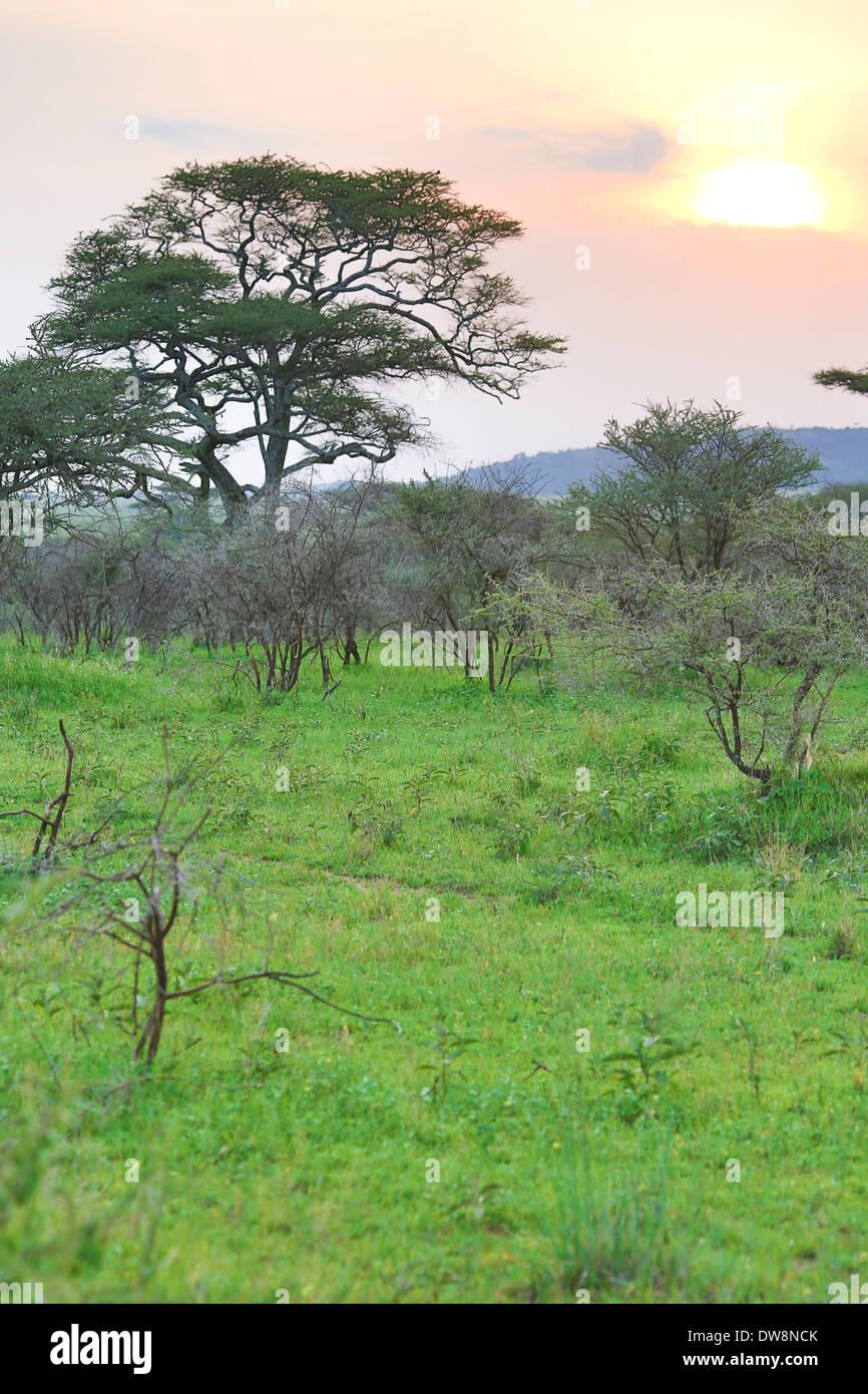 Scenery of Lake Manyara park in Tanzania. - Stock Image