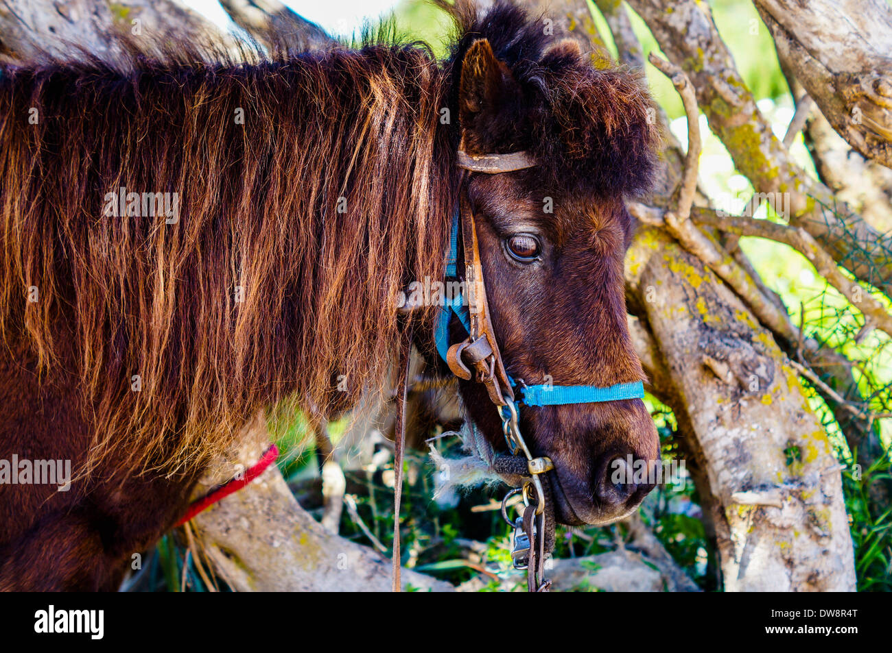 Brown donkey brown eyes Stock Photo