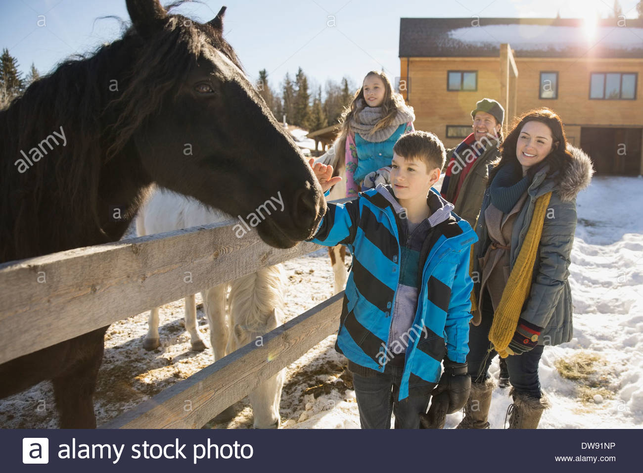Family visiting horses on winter ranch - Stock Image