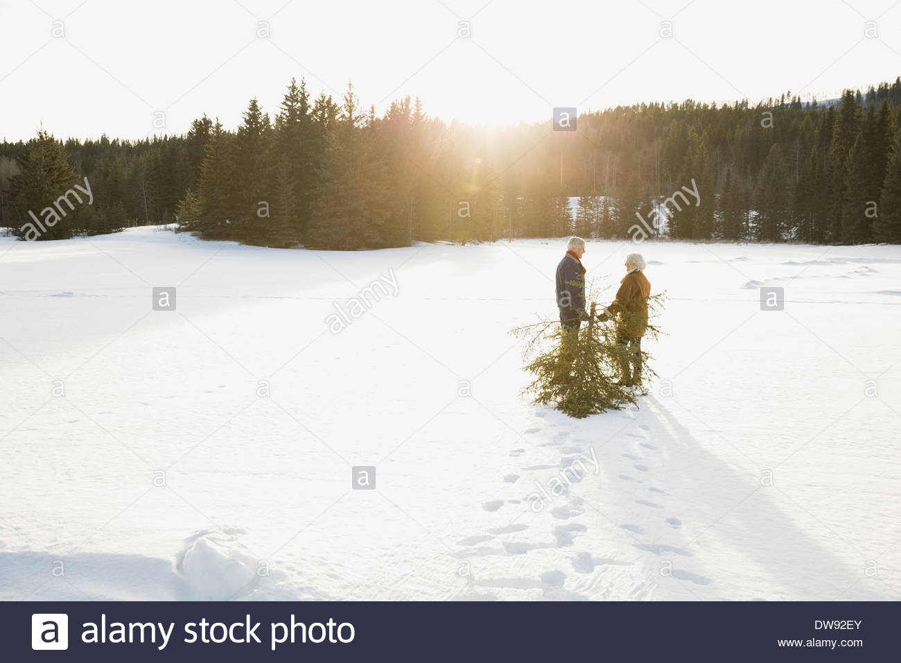 Rear view of couple dragging Christmas tree in snow - Stock Image