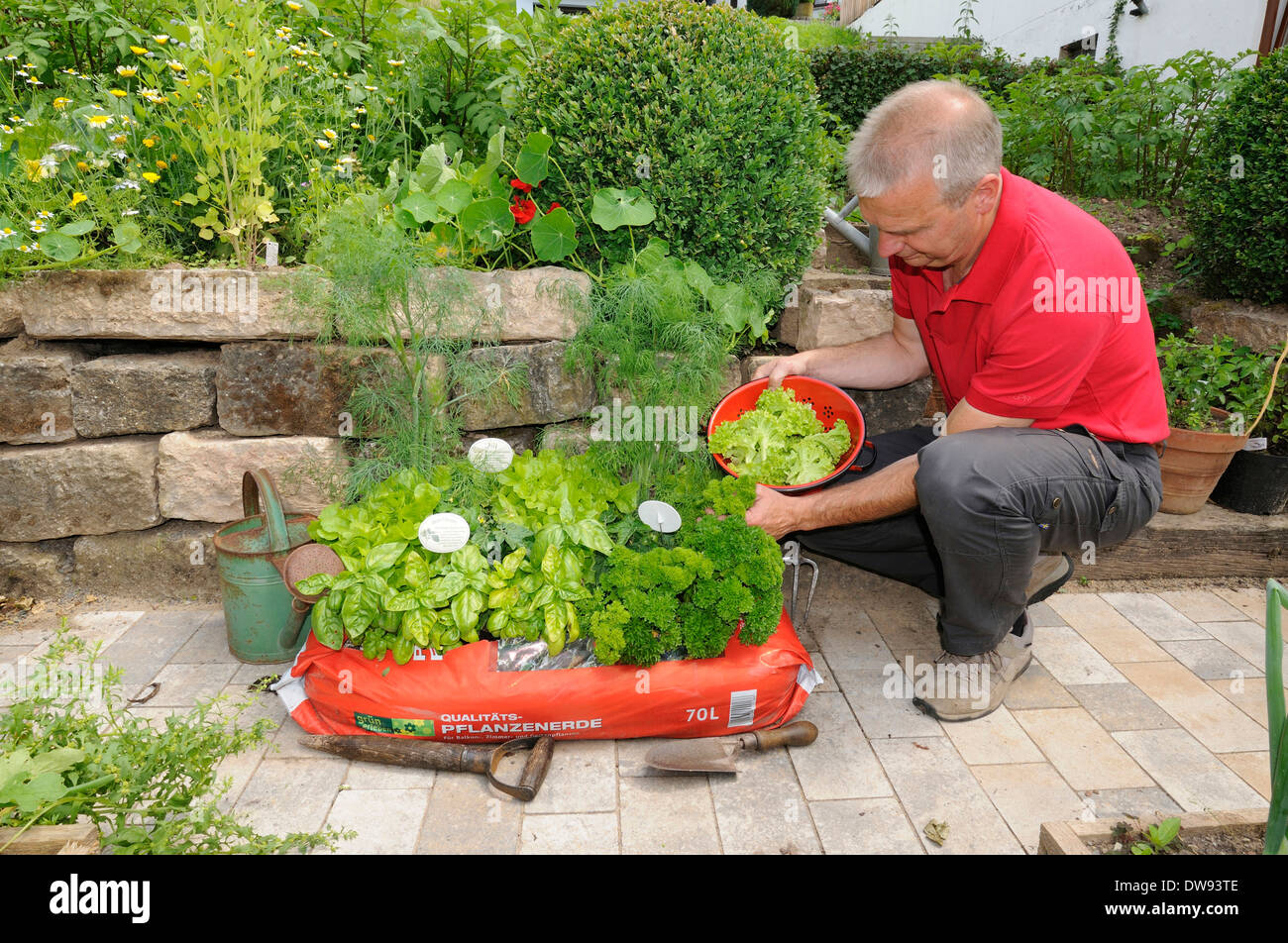 Sack with flower soil, herbs and lettuce - Stock Image