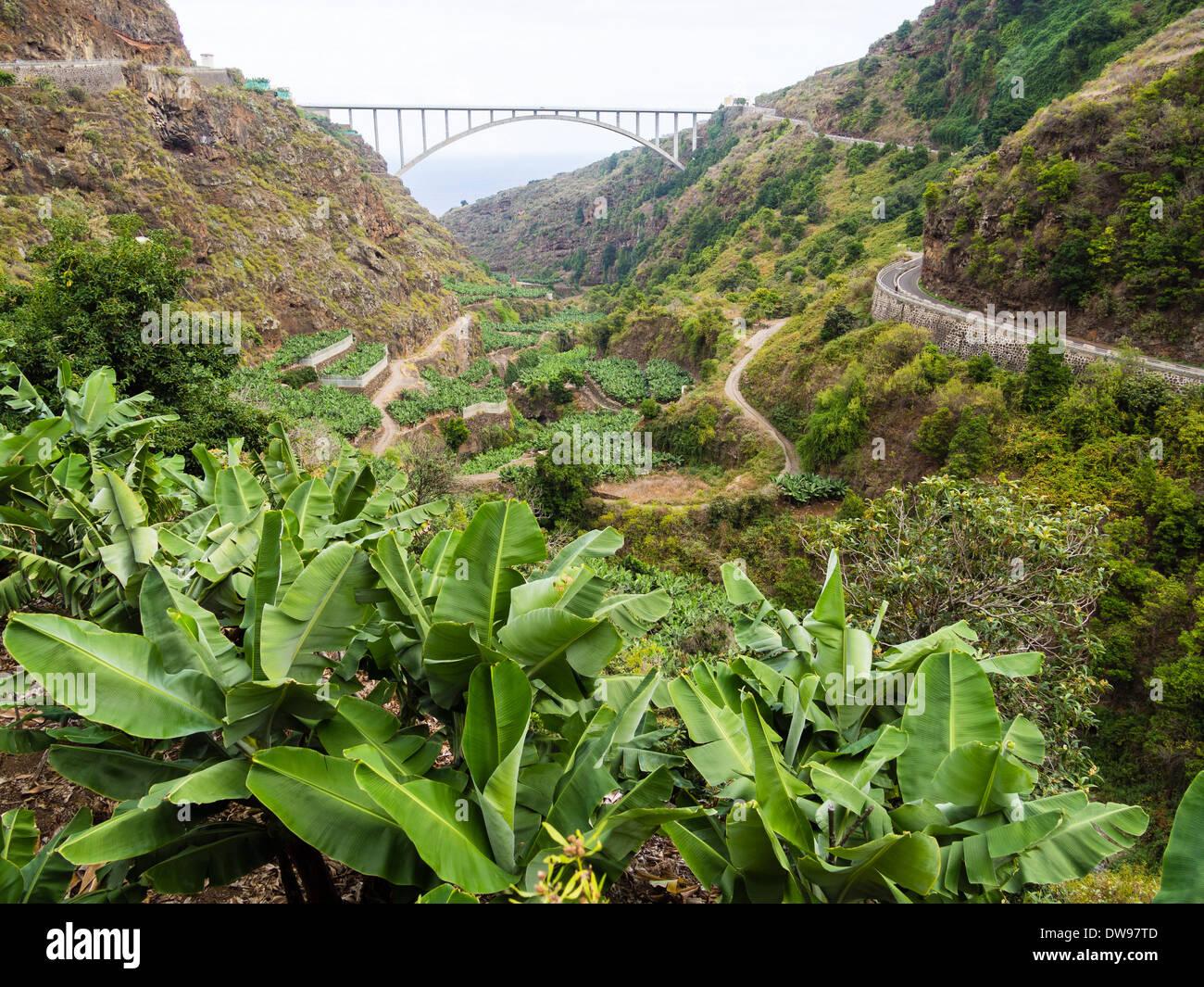 Bananas grow in the Barranco del Agua valley on the Canary Island of La Palma, traversed by the bridge Puente de Los Tilos. - Stock Image