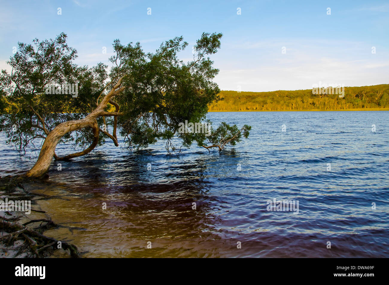 Brown Lake is a lake on North Stradbroke Island, in Queensland, Australia Stock Photo