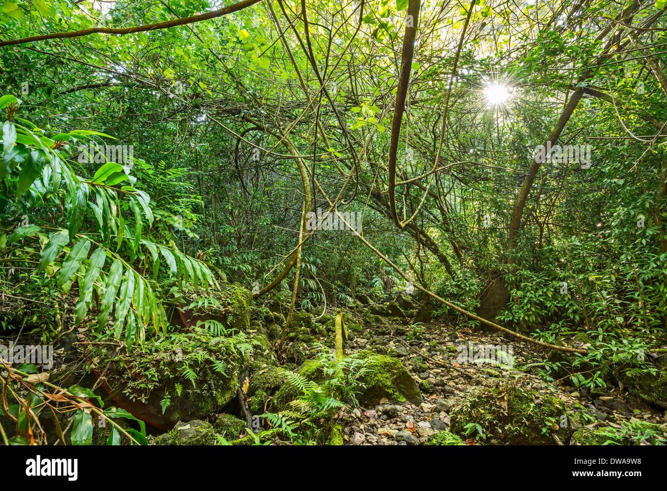 The Jungles of Nahiku on the Hawaiian Island of Maui. Stock Photo