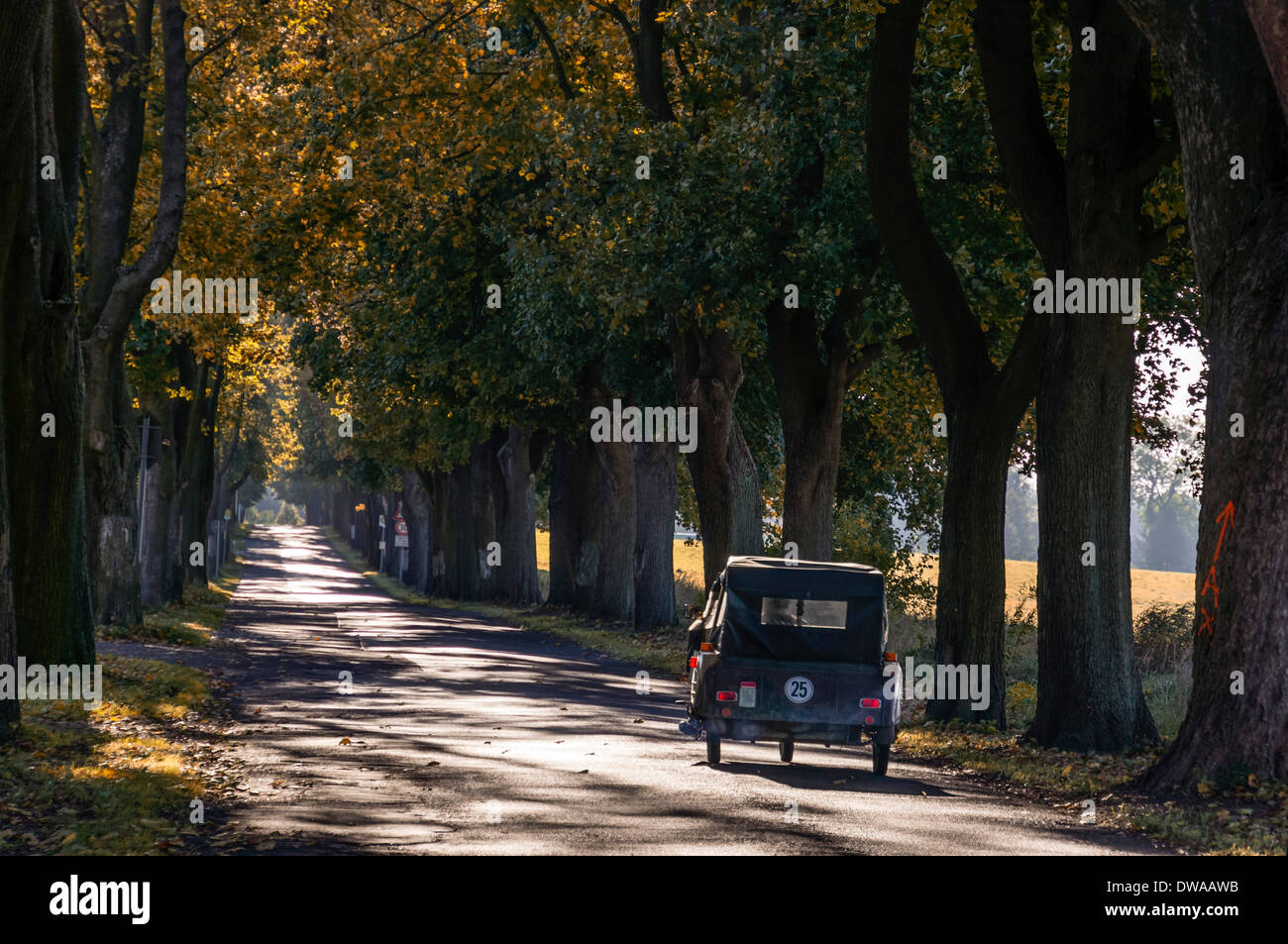 DDR Oldtimer Trike, Maple Alley near Ruedniz, Brandenburg, Germany - Stock Image