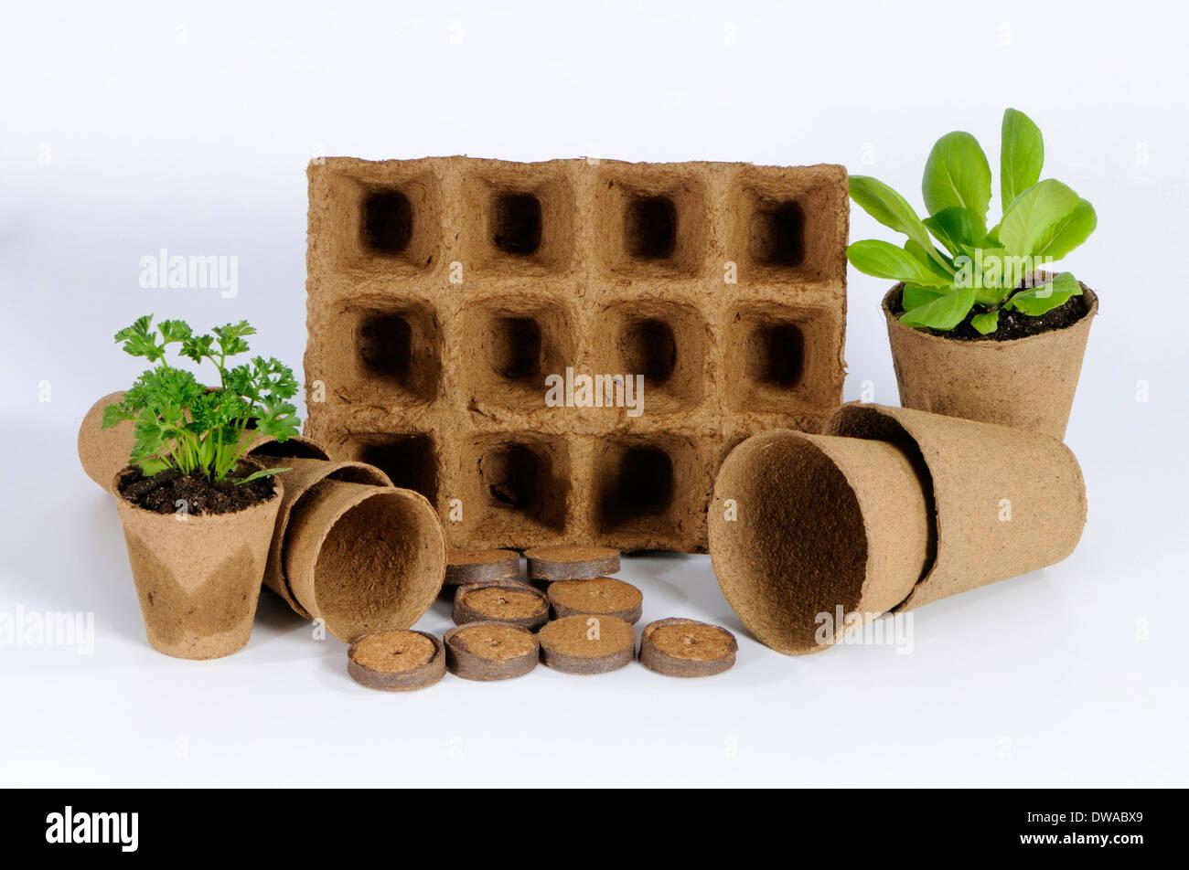 Peat pots - Stock Image