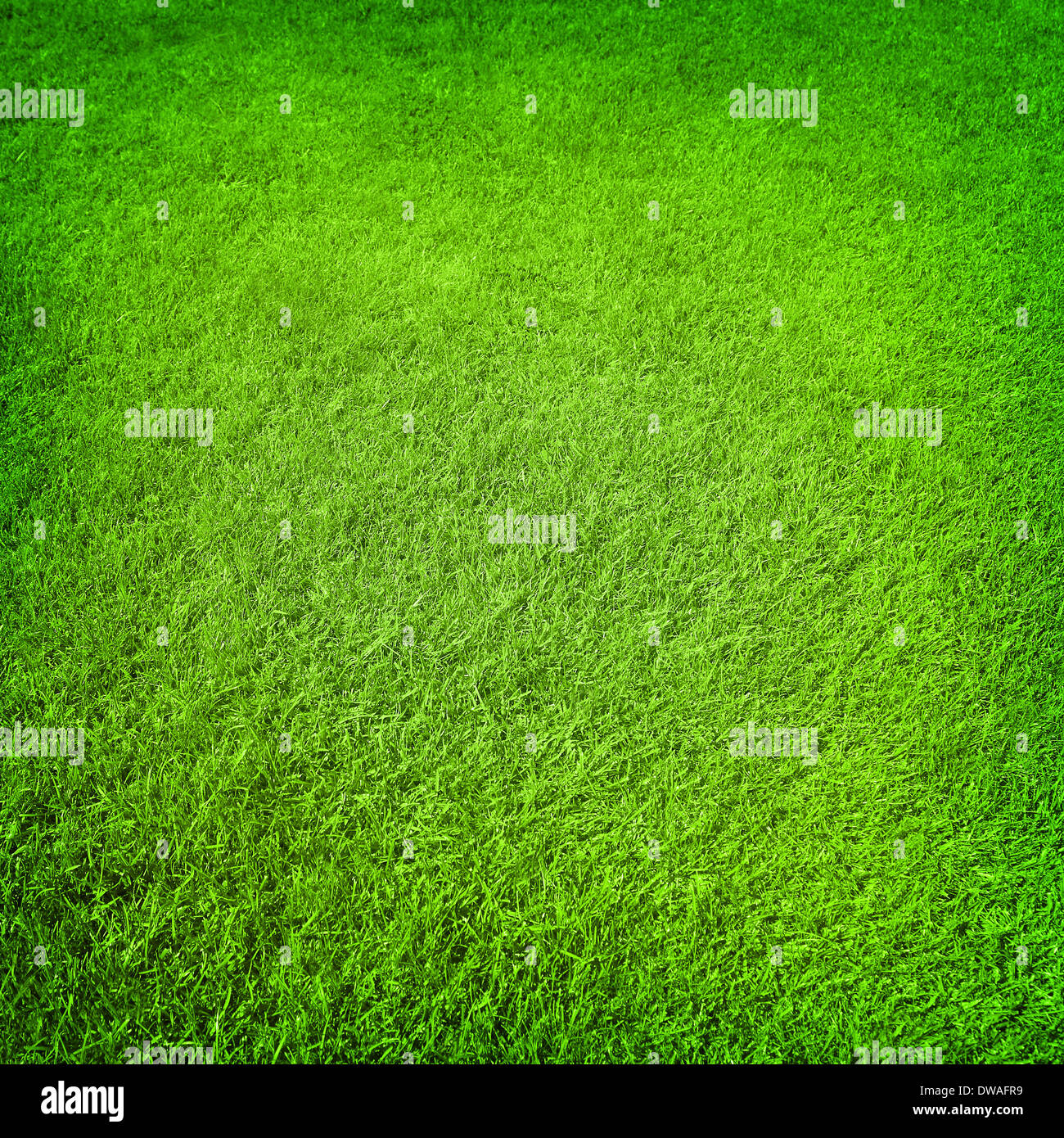 Abstract Green Grass Background Fresh Healthy Flora With