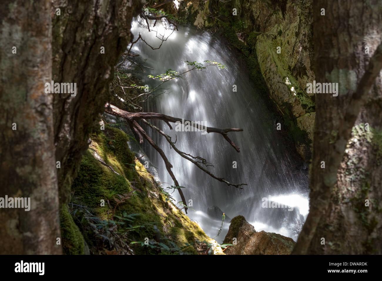 Cradle Mountain National Park Tasmania Australia - Stock Image